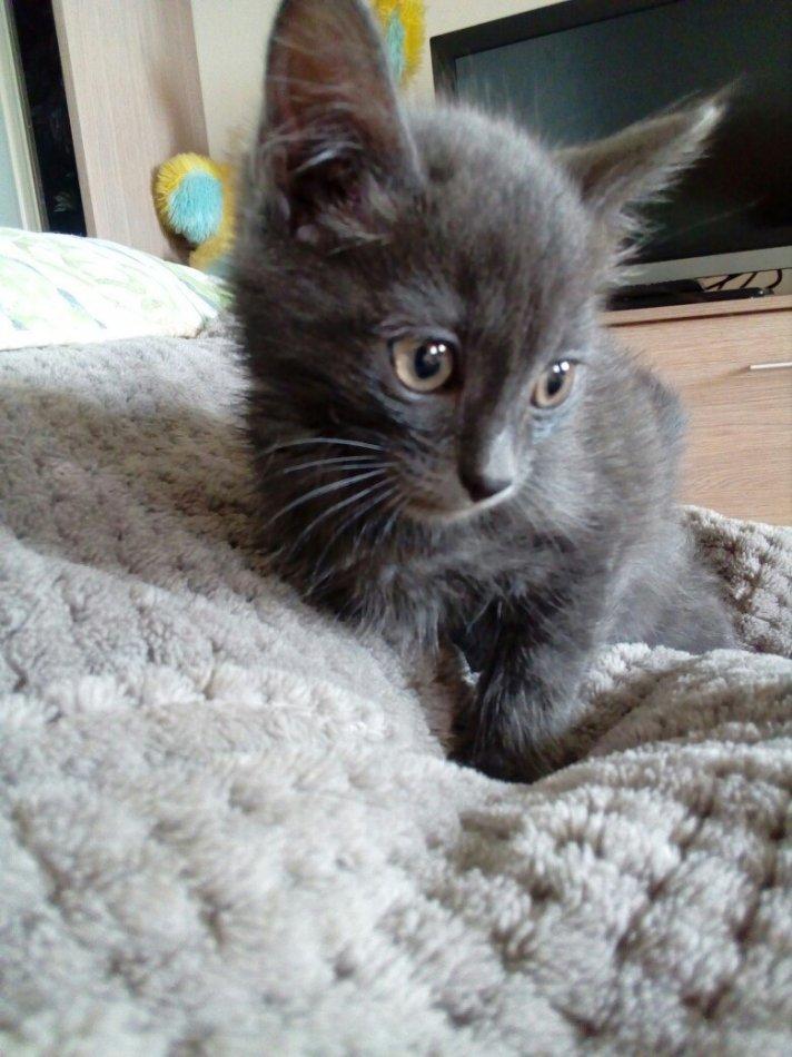 кот,кошка,котенок,требуется помощь,домашнее животное,приют