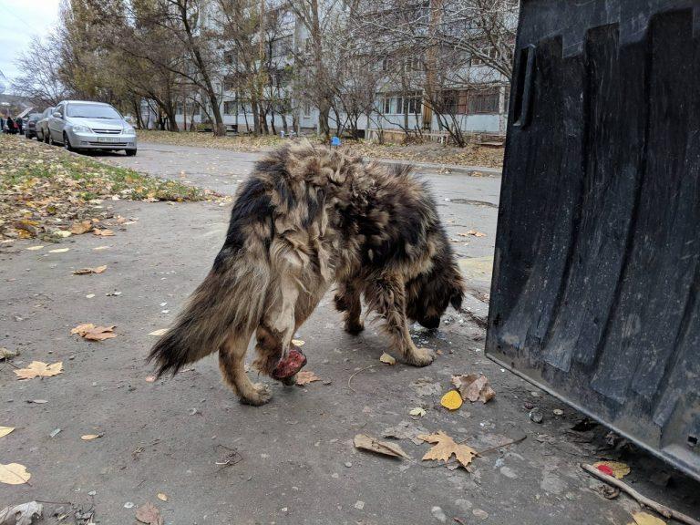 собака,пес,бездомное животное,требуется помощь,осень