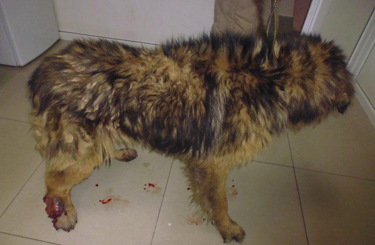собака,пес,домашнее животное,требуется помощь
