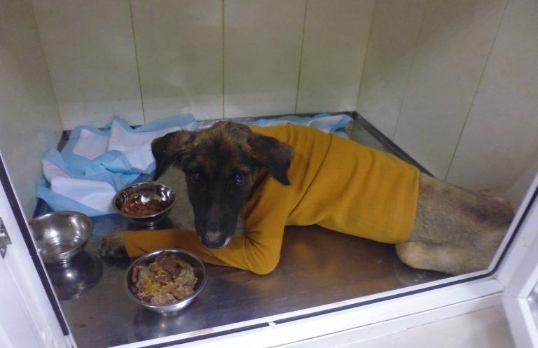 пес,собака,требуется помощь,бездомное животное,домашнее животное,приют,ветклиника