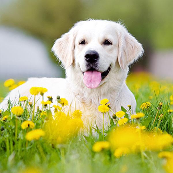 Семинар «Проблемы поведения собак: анализ и коррекция с помощью науки»