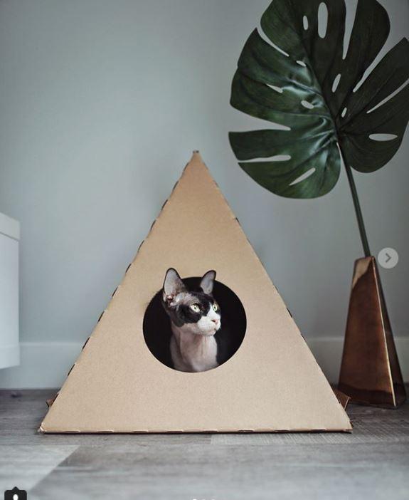 кот,кошка,питомец,домашнее животное,сфинкс,взгляд