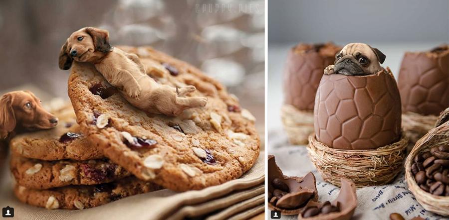 Щенки на печенье
