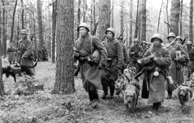 Собаки на войне фото