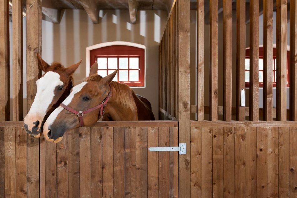 Лошади в конюшне фото