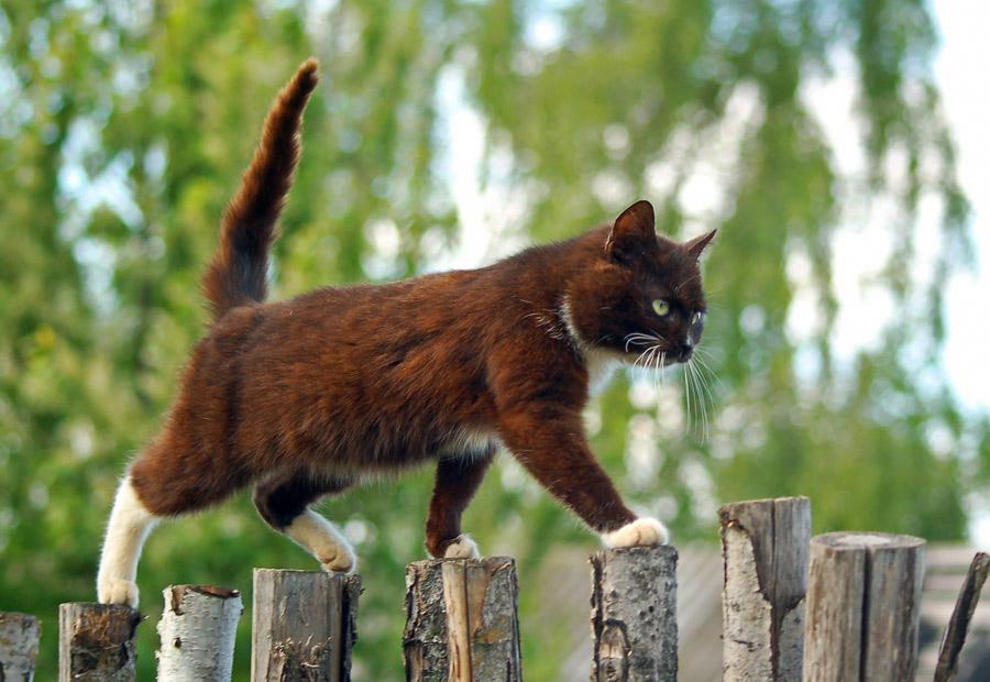 Выпускать ли кошку на улицу фото