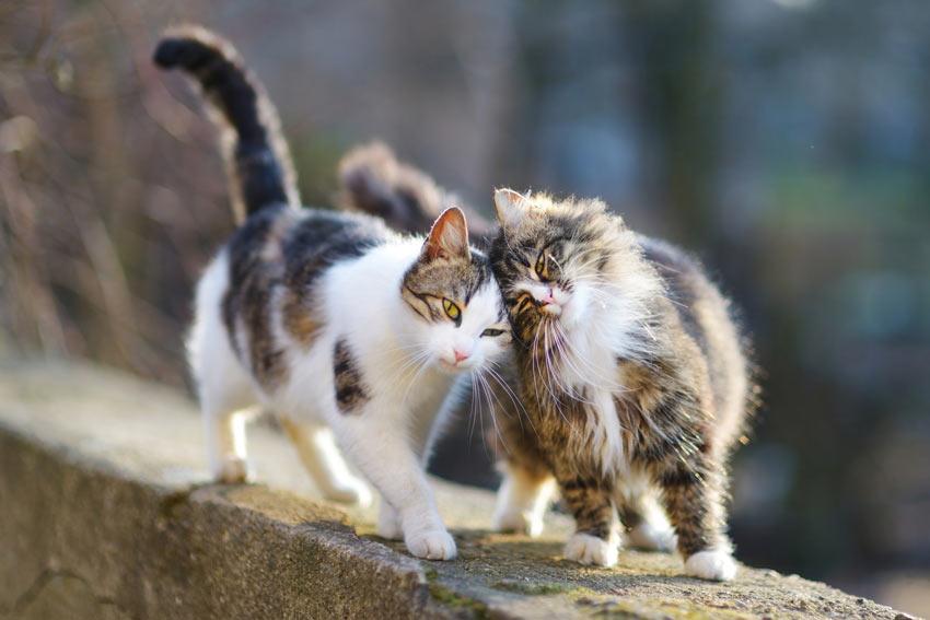 Кошки на улице фото