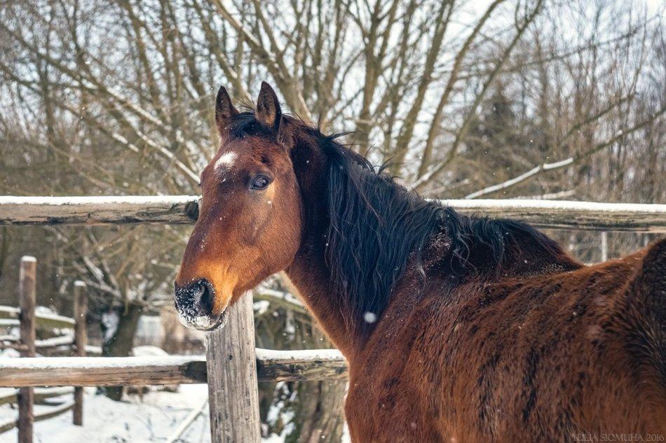 Гнедая лошадь зимой фото
