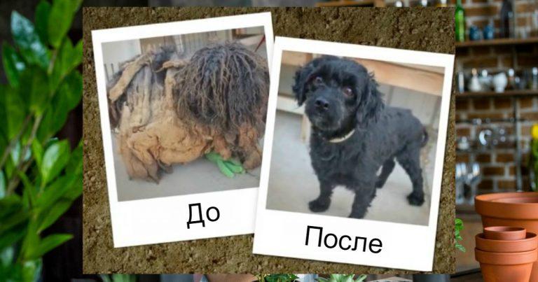 собака,пес,домашнее животное,помощь,преображение,до/после