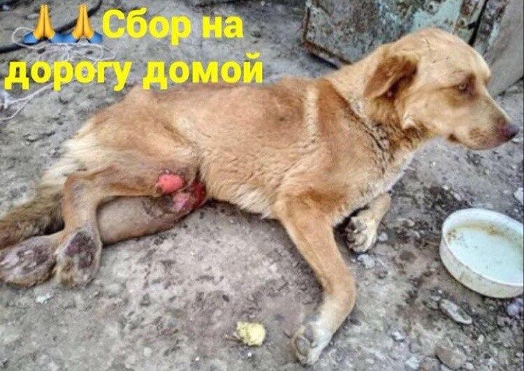 домашнее животное, дикое животное, спасение, помощь