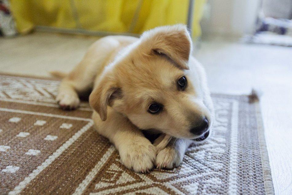 собака,пес,бездомное животное,домашнее животное,требуется помощь