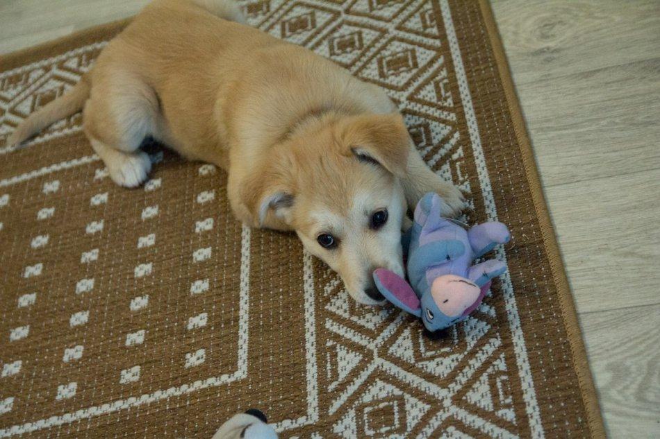 собака,пес,требуется помощь,бездомное животное