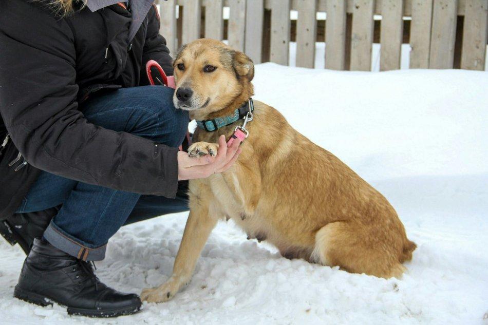 собака,пес,домашнее животное,бездомное животное,требуется помощь
