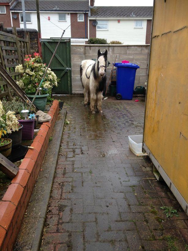 пони,лошадь,сад,домашнее животное,требуется помощь