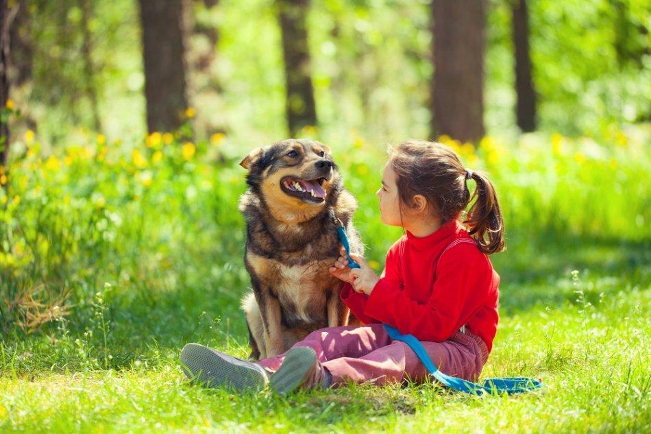 Собака понимает человека фото