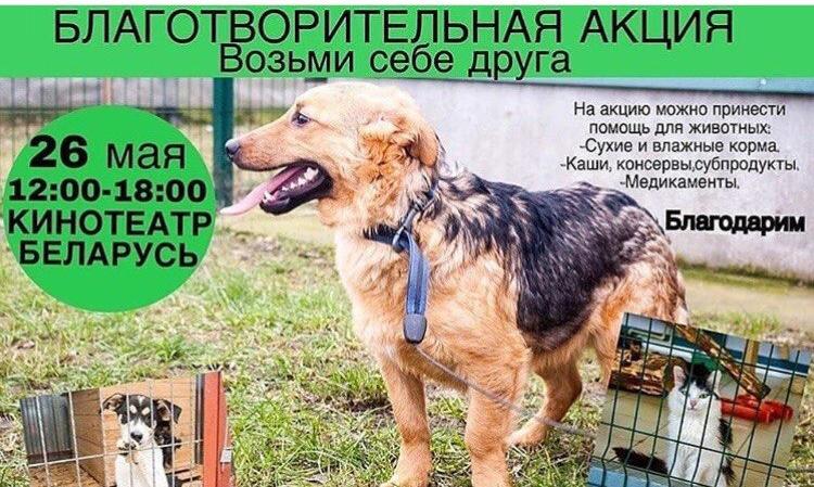 Благотворительная акция в помощь брошенным животным.