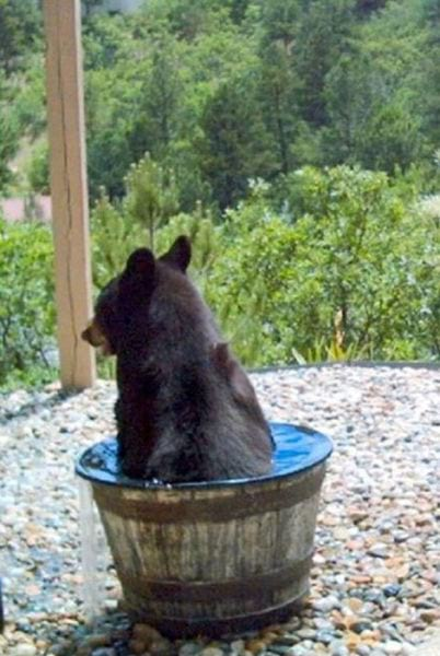 мишка,медведь,дикое животное,хищник,вода,камни,лес