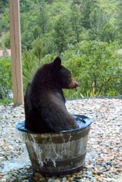 медведь,медвежонок,вода,камни,лес,дикое животное,хищник