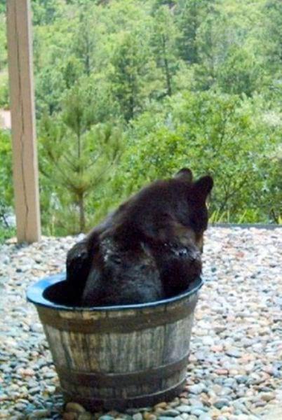 медведь,медвежонок,хищник,дикое животное,лес,камни