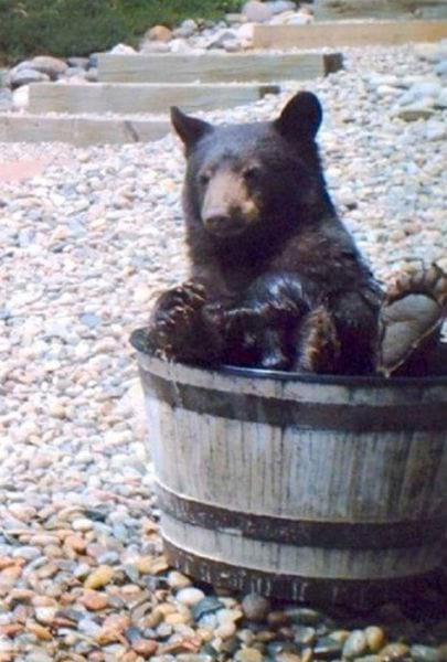 медведь,медвежонок,камни,хищник,дикое животное