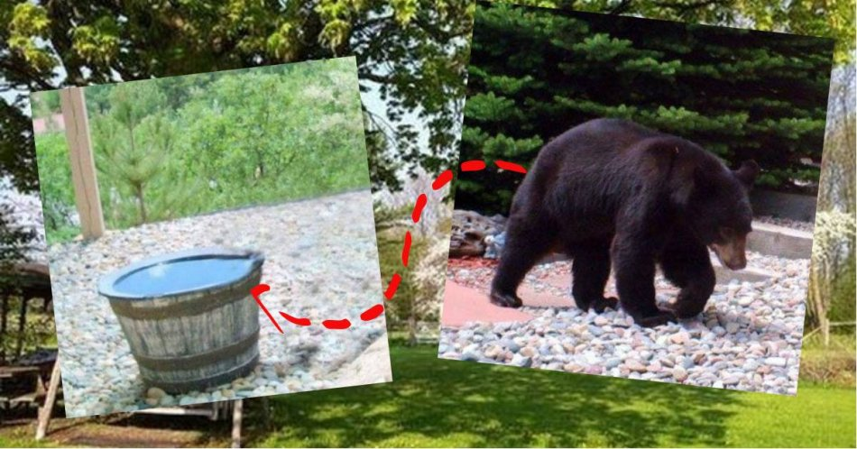 медвежонок,хищник,камни,вода
