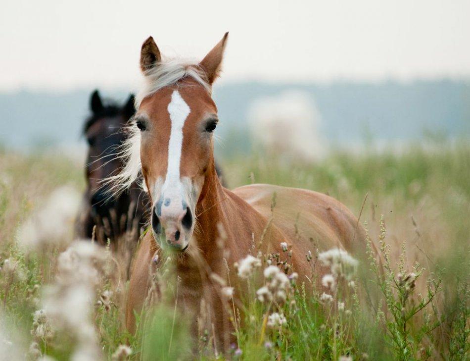 Лошадь прислушивается фото