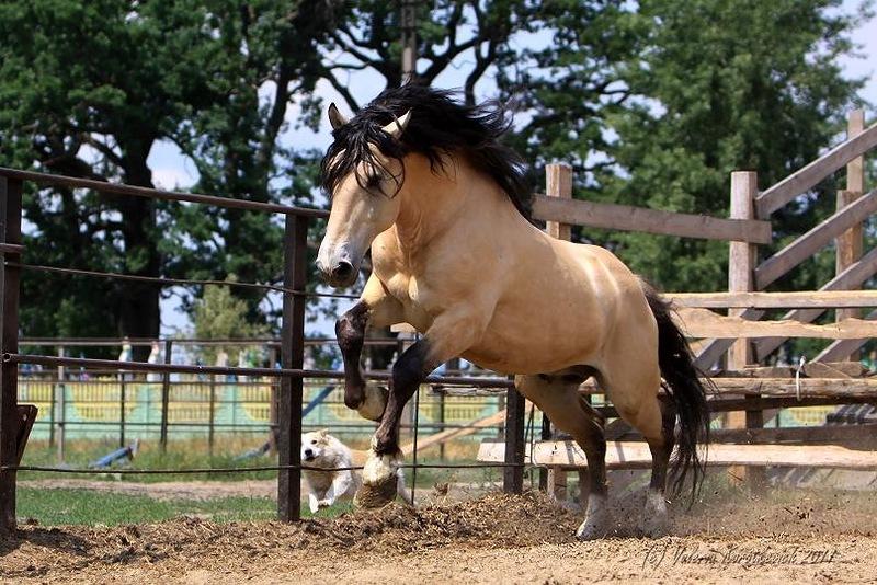Лошадь буланой масти фото