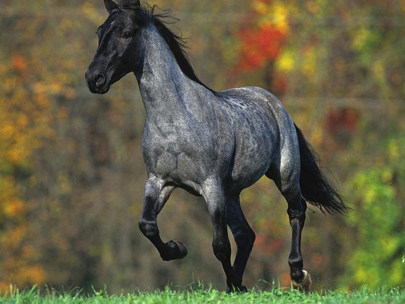 Лошадь мышастой масти фото