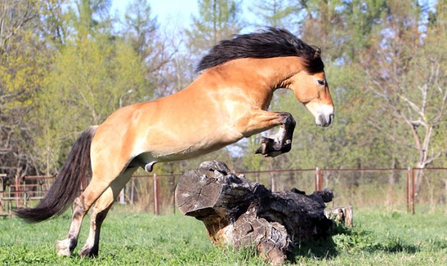 Лошадь саврасой масти фото