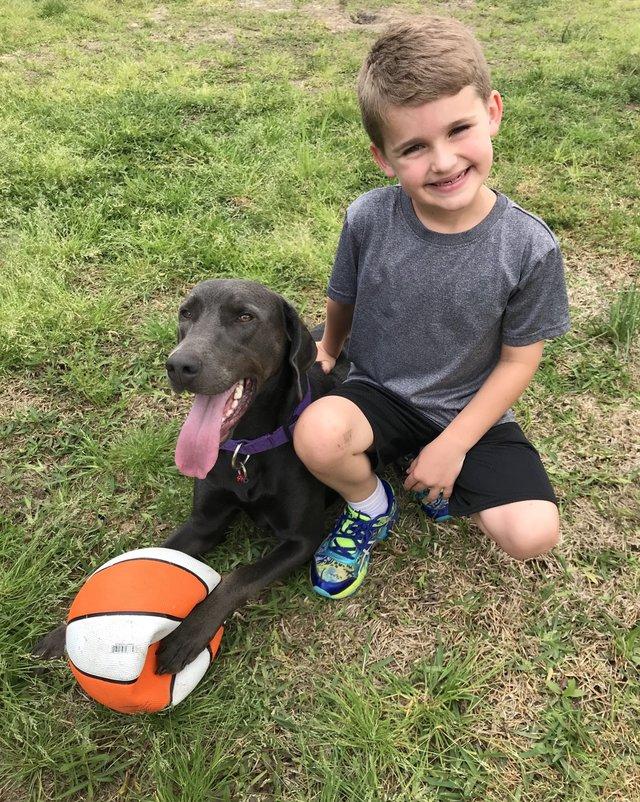 собака,пес,домашнее животное,мальчик,ребенок,мячик,трава,поле