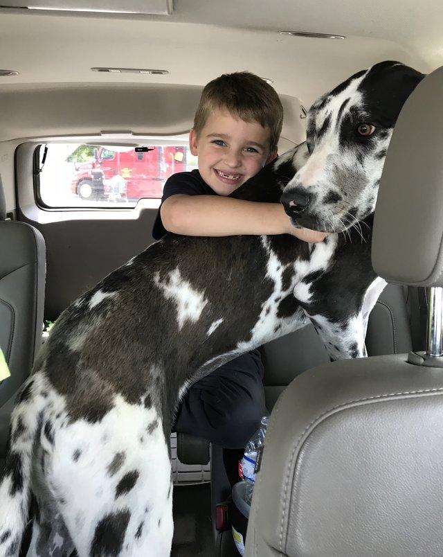 собака,пес,домашнее животное,ребенок,приют,машина