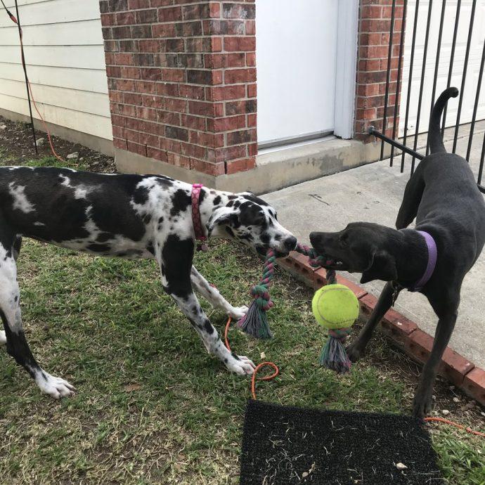 собака,пес,домашнее животное,приют,мячик,игрушки