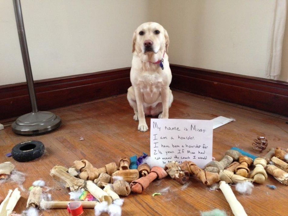 Чувство вины у собак фото