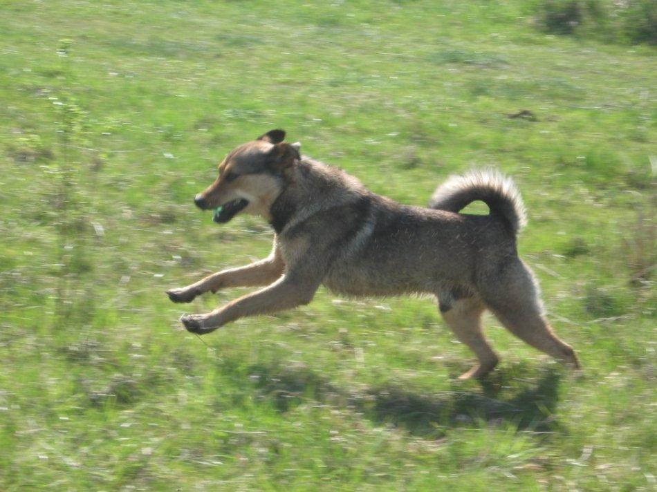 Собака скачет по траве фото