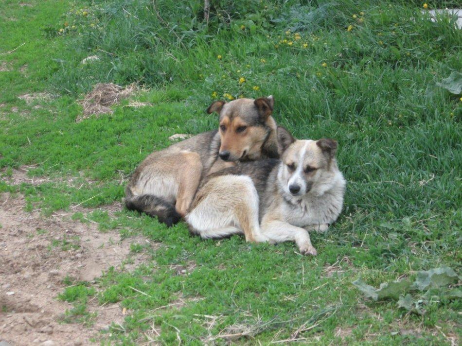 Собаки греют друг друга фото