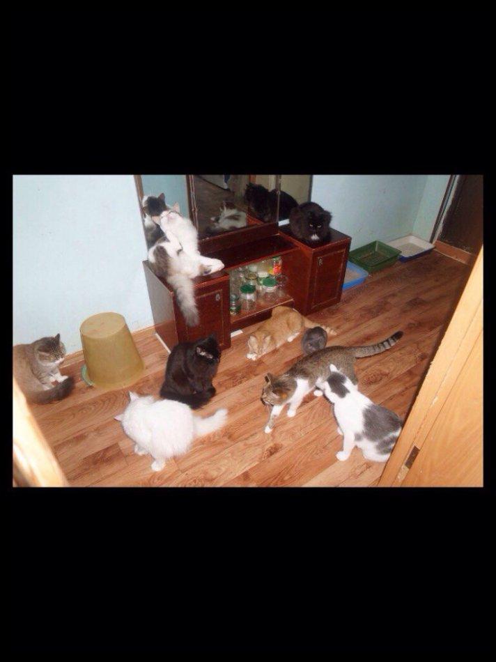 кот,кошка,домашнее животное,требуется помощь