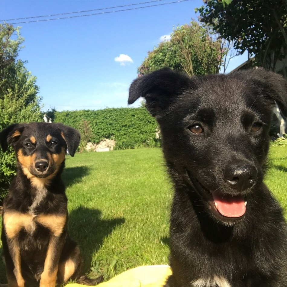 собака, щенок, домашнее животное, дикое животное