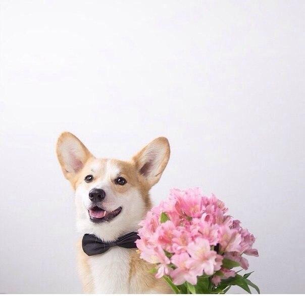 собака, искусство, домашнее животное, дикое животное