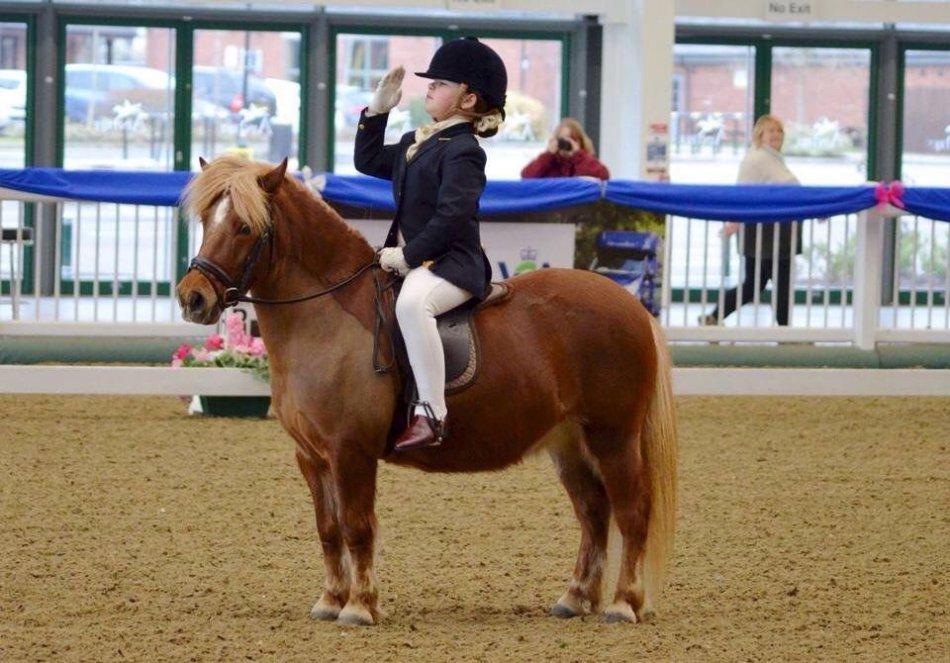 Шетлендский пони на соревнованиях фото