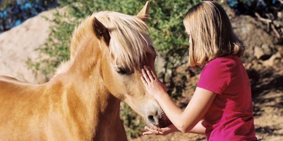 Человек угощает лошадь фото
