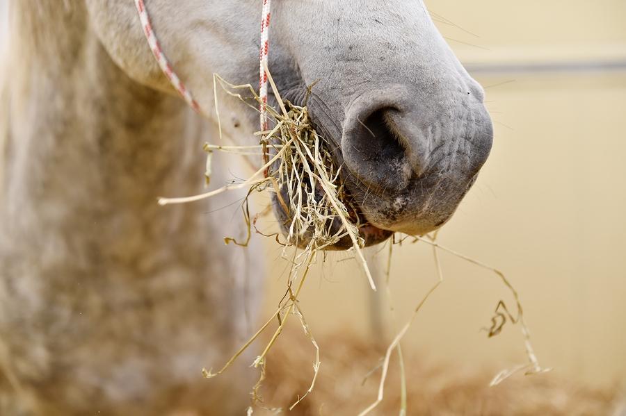 Лошадь ест сено фото