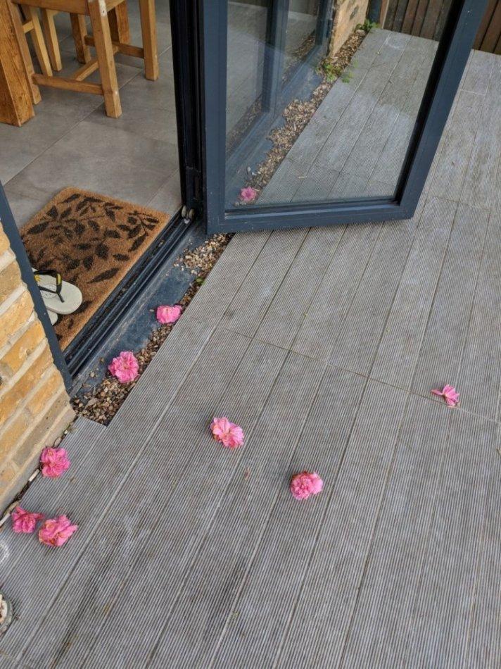 кот,кошка,домашнее животное,розы,лепестки,бутоны