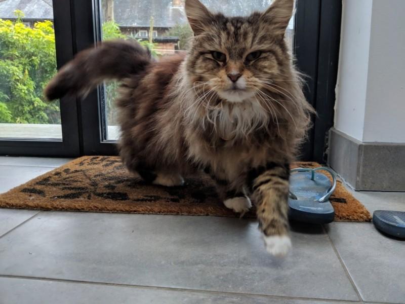 кот,кошка,домашнее животное,питомец