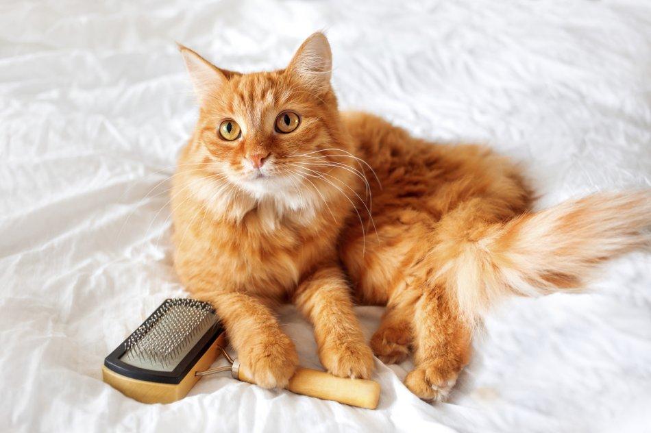 Кошка и пуходерка фото