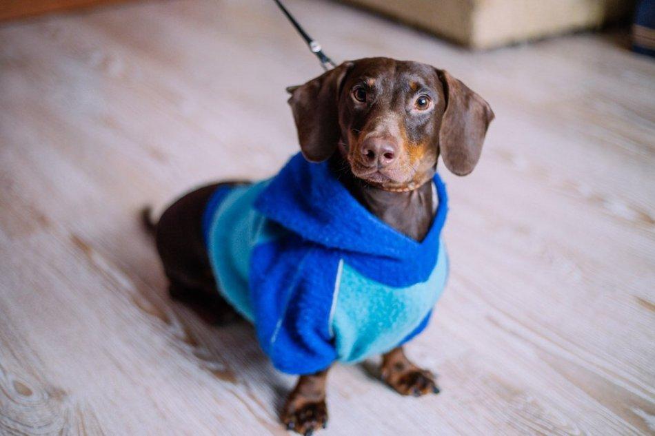 собака,пес,домашнее животное,ищу дом,требуется помощь