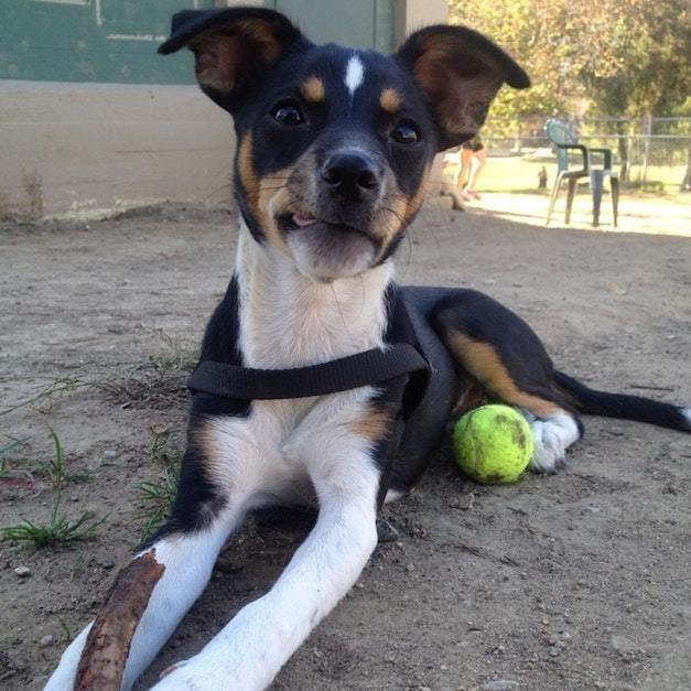 пес,собака,домашнее животное,щенок,приют,требуется помощь