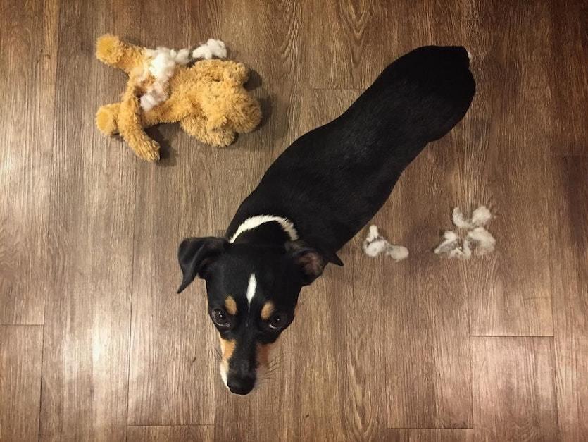 собака,пес,домашнее животное,приют,щенок