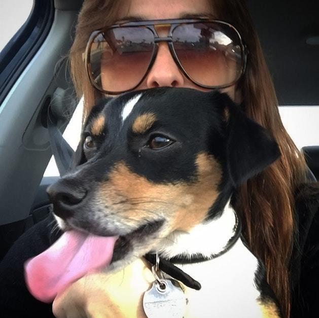 пес,собака,щенок,девушка,приют