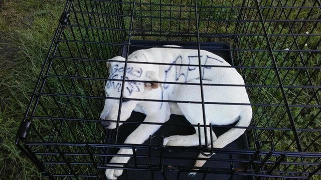 собака,пес,бездомное животное,приют,требуется помощь