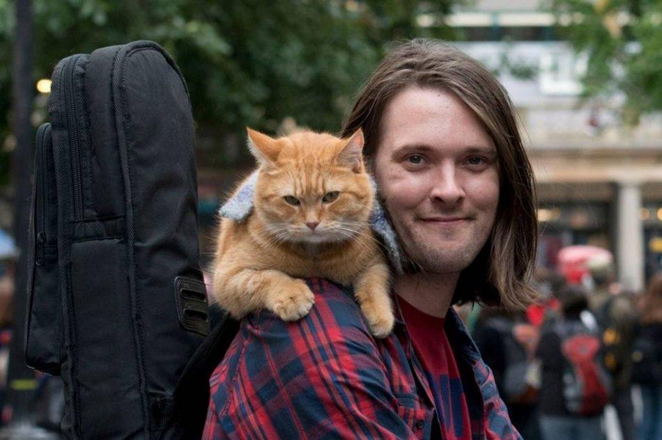 Уличный кот по имени Боб фильм фото